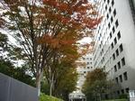 2008年11月14日品川飯田橋界隈 019.jpg