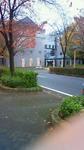 紅葉黄葉と古河庁舎