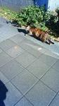 陽だまり散歩の猫.jpg