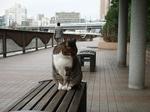 2009年1月26日猫 牛込橋 009.jpg