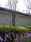 2009年4月5日桜 010.jpg
