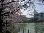 2009年4月8日桜 上野公園・新宿御苑 002.jpg