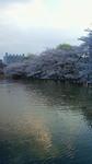 2010桜 上野公園.jpg