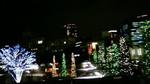 樹々の輝くクリスマスイルミネーション201012022022000.jpg