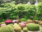 咲き誇る躑躅 旧古河庭園 019.jpg