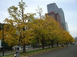 皇居前銀杏並木2010年11月空・サイクリング 127.jpg