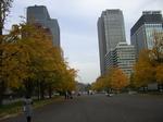 皇居前銀杏並木2010年11月空・サイクリング 129.jpg
