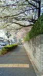 芝浦中央公園付近201104080735001.jpg