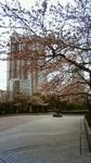 西新宿桜201104081012000.jpg