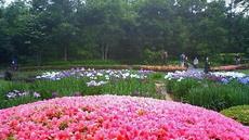 皇居東御苑 花菖蒲 かきつばた 躑躅 201106071633000.jpg