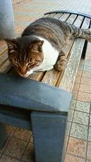 寛ぐ猫 201106121215000.jpg