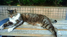 寛ぐ猫 201106121215001.jpg