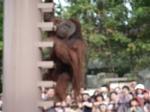 茶会・旭山動物園2006 042.jpg